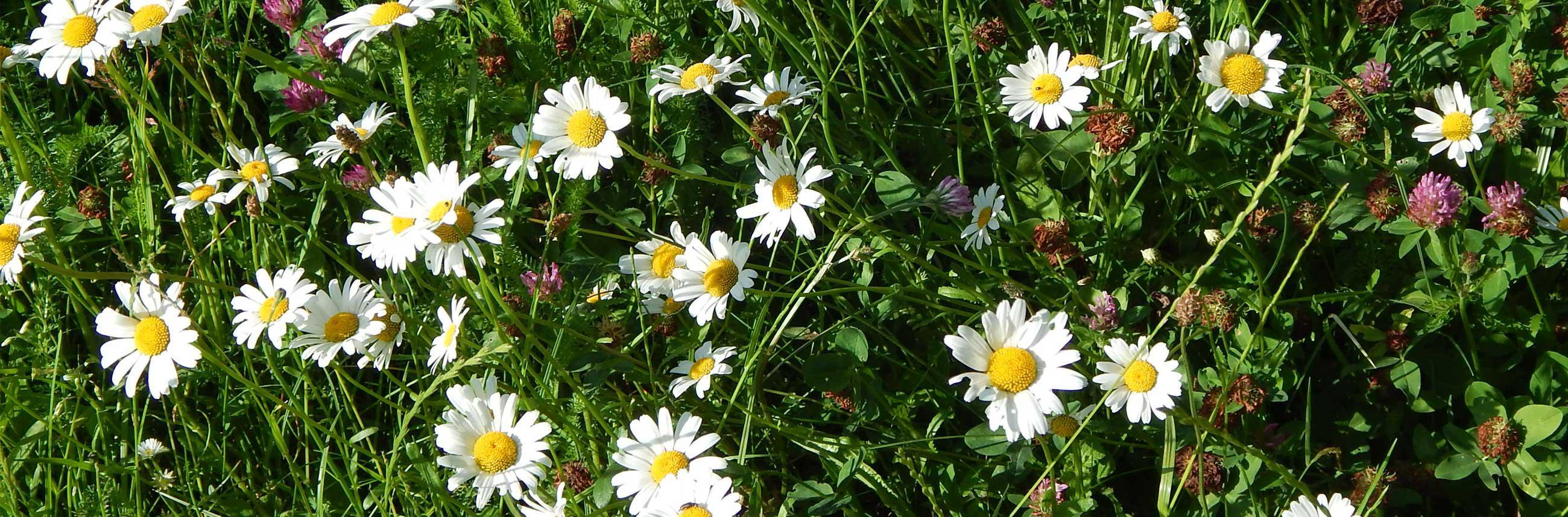 Ellernhof - Blumen