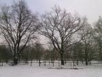 Winterzauber auf dem Ellernhof
